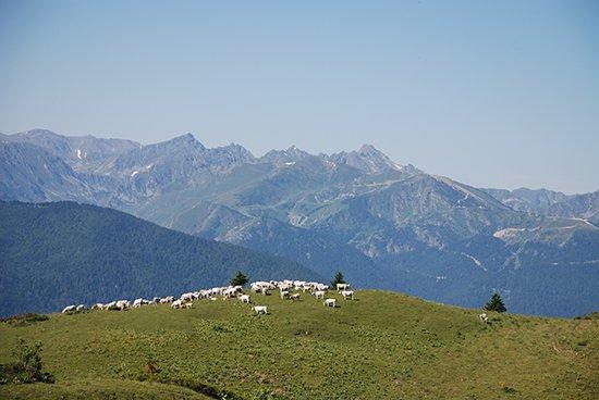 pyrenees4.jpg