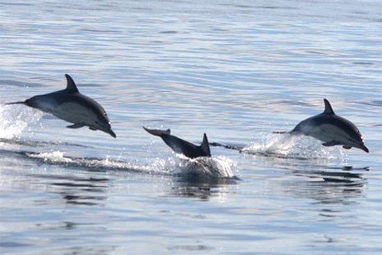 dolfijnen-1.jpg